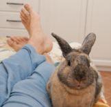 Il Coniglio è Un Eccezionale Animale Da Compagnia, Questo è Ancor Più Vero  Quanto Più Si Costruisce Una Relazione Con Lui.